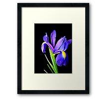 Single flower. Framed Print