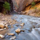 The Virgin River Narrows, in Zion National Park, Utah by Alan C Williams