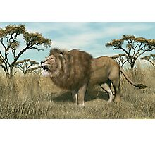 Male African Lion Photographic Print