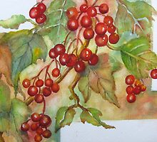 Kalyna Berries 2 by bevmorgan