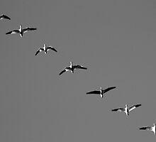 Migration by Daniel Owens