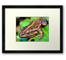Eye Of The Frog Framed Print