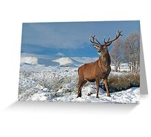Deer-Stag Greeting Card