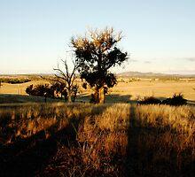 Beauty of Bushland by Faith Inman