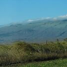 On the Way to Waimea by Ellen Cotton
