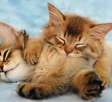 Sleepy kittens by sarahnewton
