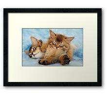 Sleepy kittens Framed Print