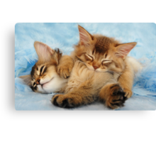 Sleepy kittens Canvas Print