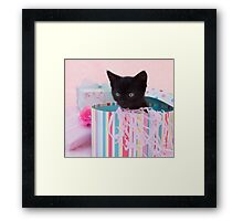 Birthday kitten Framed Print