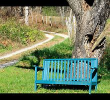 Bench by Tree by Leta Davenport