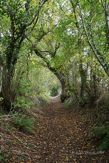 Autumn Walkway, Compton Abbas Devon by Frank Etchells