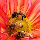 Pollen Party by Kathy Yates