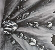 Raindrops by Philip Holley