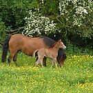 foal and mother by sarahnewton