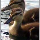 Baby Ducks by Phae2584
