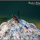 Dragonfly by Phae2584