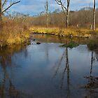 Flatbrook Stream during Pheasant Hunting Season by Anthony  Romano