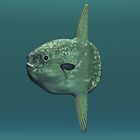 Ocean Sunfish (Mola Mola). by Walter Colvin