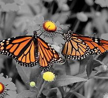 Butterfly BnW Dream by Lu Collazo
