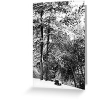 Serene - Winter Landscape Collection 2009 - Montana Greeting Card