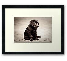 Archer at 10 Weeks Looking Handsome Framed Print