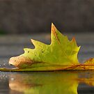 The last leaf of Autumn by Heather Thorsen