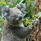 Koala having a dinner by Anton Gorlin