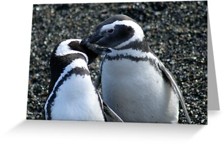 Penguin Love  by belle76