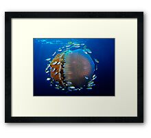 Jellyfish with fish Framed Print