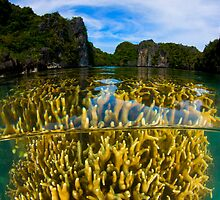Coral Lagoon by Carlos Villoch