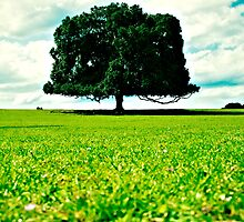 lonely tree by Ines Sulj