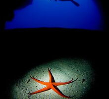 Diver and sea star by Carlos Villoch