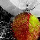 Last Leaf Life Remains by buttonovski