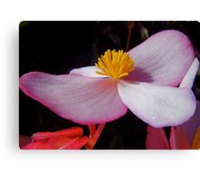 Begonia. Canvas Print