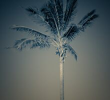 Palm 7 by Simone Corrado