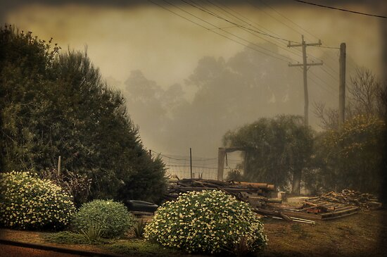 Backyard Fog by Elaine Teague