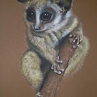 Bush Baby Possum in Pastel by Louise Page