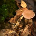 Little brown umbrella fungi by steppeland