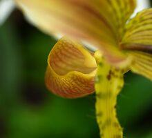 Orchid 3 - San Francisco, CA by SebastianPhoto