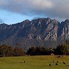 Mt Rollan .Tas by Norman Winkworth