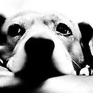 Hound Dog by davidbunting