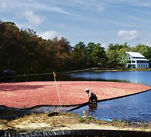 Cranberry Harvest 1 by scottnj61
