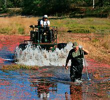 Cranberry Harvest 3 by scottnj61