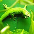 Geicko gecko.  by spydergirl13