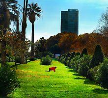 Stretching at Parc de la Ciutadella, Barcelona by Carlos Lorenzo