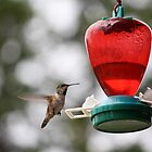Hummingbirds are cool by Creative Windmill Photography