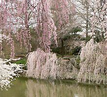 Spring in the Japanese Garden by MischaC