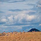 Springbok | Namibia by Olwen Evans