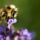 Arched feeding bee by Themossgirl