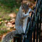 Squirrel  by DPBlunt